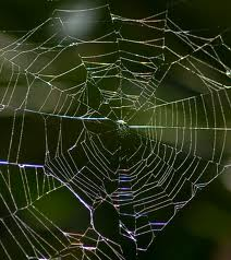 A picture of a spiders web. It's being used as a metaphor about the operational web of a companies marketing effort.